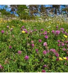 Louka na výsušnou půdu - květnatá - prodej semen - 10 g