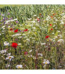 Luční květy na obohacení porostu - prodej semen - 10 g